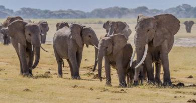 Drony poskytují nový druh ochrany slonů