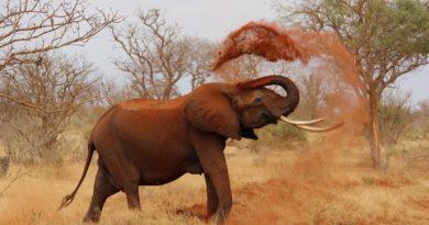obchodování se slonovinou