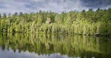 vysadil 750 milionů stromů