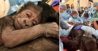 zoo povolala normální doktory
