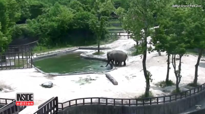 sloni spojili síly