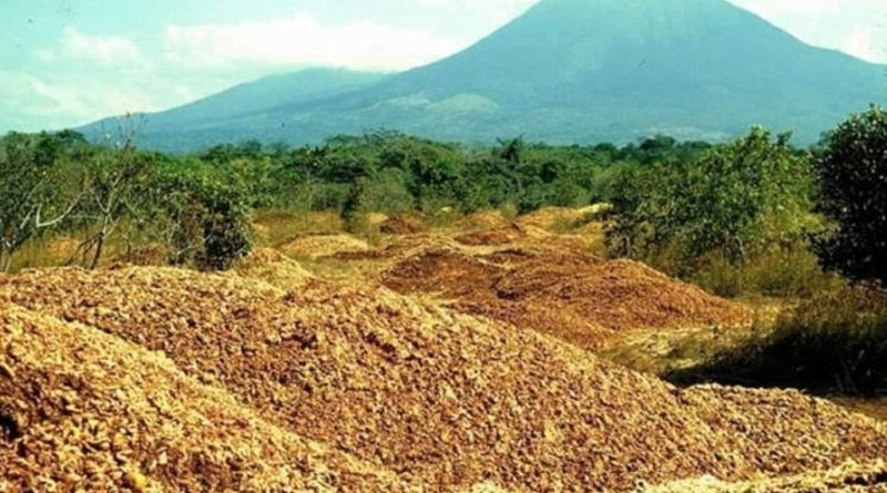 Vyhodili 12 000 tun pomerančové kůry do parku. Co se poté stalo?