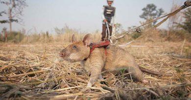 krysy chrání